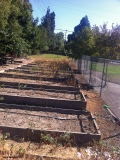 14 garden beds await